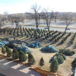 Christmas Tree Sales - Noble Fir Sponsor - $1000
